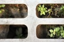 La transition écologique « en vert et contre tout »