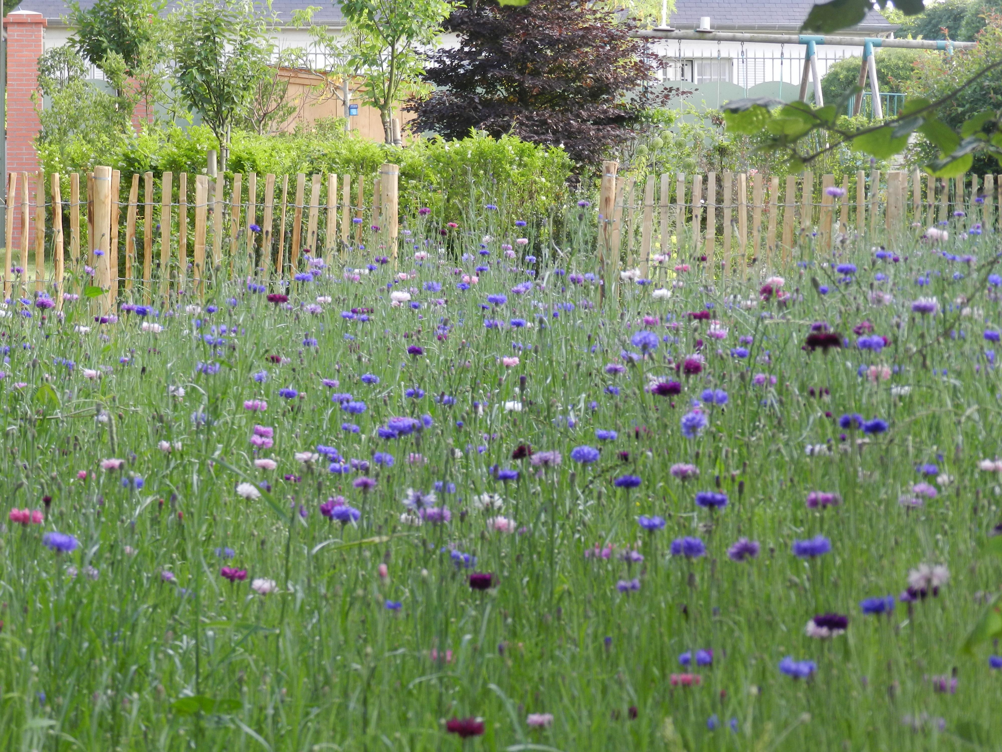 Versailles 78 un jardin for Jardin potager 78