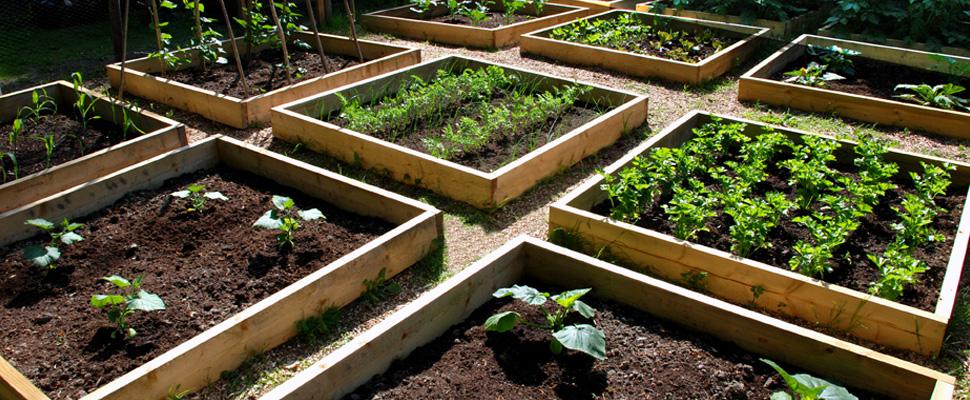 agronomie-urbaine