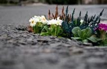 Un Jardin «en vert et contre tout»