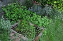 La biodiversité dans un jardin